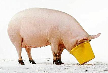 inseparable phrasal verb: pig out | English Help Online's Blog I Pigged Out For A Week